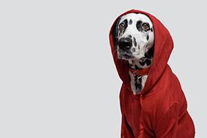 Reporte Canino